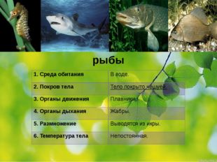 рыбы 1.Среда обитания 2. Покров тела 3. Органы движения 4. Органы дыхания 5.