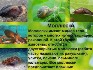Моллюски. Моллюски имеют мягкое тело, которое у многих из них защищено ракови
