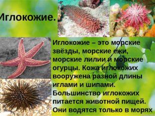 Иглокожие. Иглокожие – это морские звёзды, морские ежи, морские лилии и морс