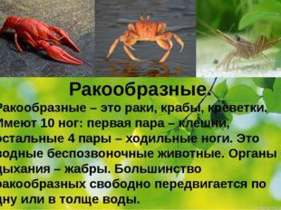 Ракообразные. Ракообразные – это раки, крабы, креветки. Имеют 10 ног: первая