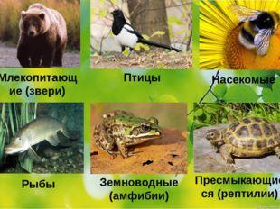 Млекопитающие (звери) Птицы Насекомые Рыбы Земноводные (амфибии) Пресмыкающие