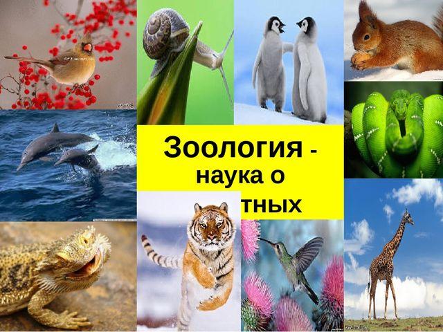 наука о животных Зоология -