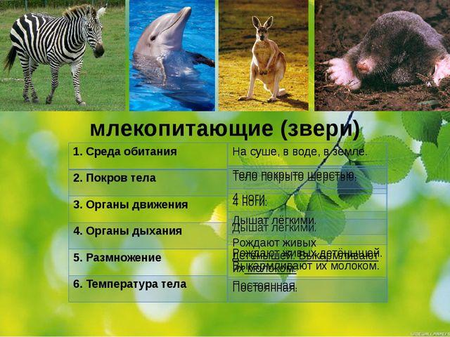 млекопитающие (звери) 1.Среда обитания 2. Покров тела 3. Органы движения 4. О...