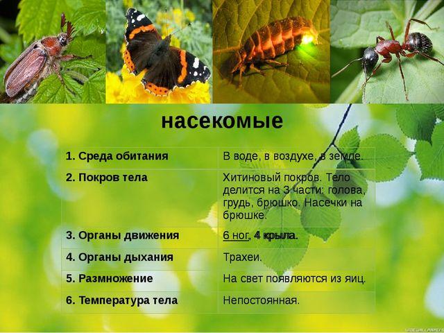 насекомые 1.Среда обитания 2. Покров тела 3. Органы движения 4. Органы дыхани...