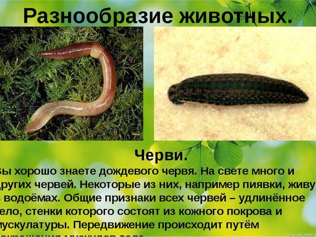 Разнообразие животных. Черви. Вы хорошо знаете дождевого червя. На свете мног...