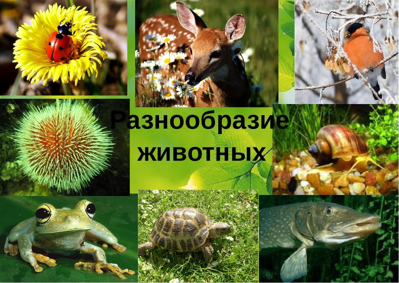 животных Разнообразие