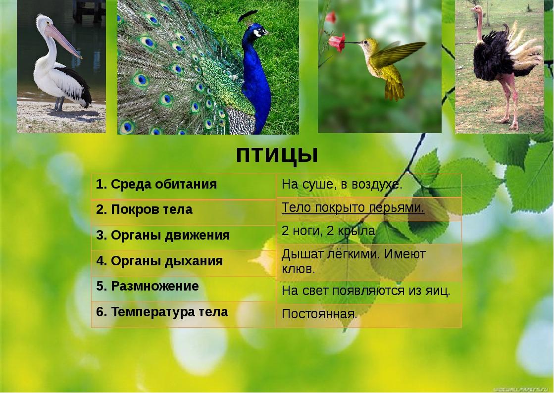 птицы 1.Среда обитания 2. Покров тела 3. Органы движения 4. Органы дыхания 5....