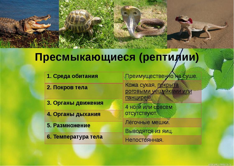 Пресмыкающиеся (рептилии) 1.Среда обитания 2. Покров тела 3. Органы движения...