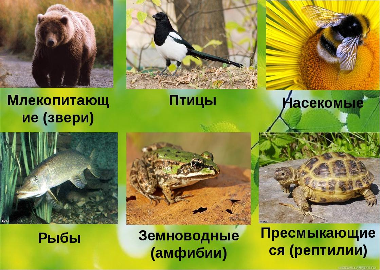Млекопитающие (звери) Птицы Насекомые Рыбы Земноводные (амфибии) Пресмыкающие...