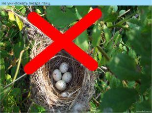 Не уничтожать гнезда птиц.