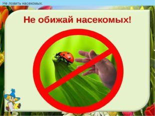 Не ловить насекомых.