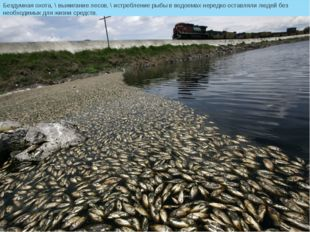 Бездумная охота, \ выжигание лесов, \ истребление рыбы вводоемах нередко ост