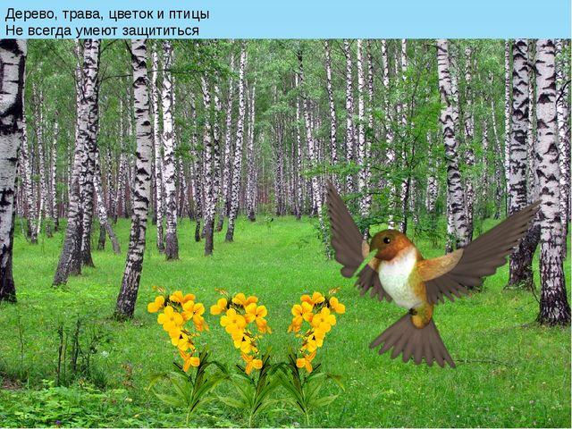 Дерево, трава, цветок и птицы Не всегда умеют защититься