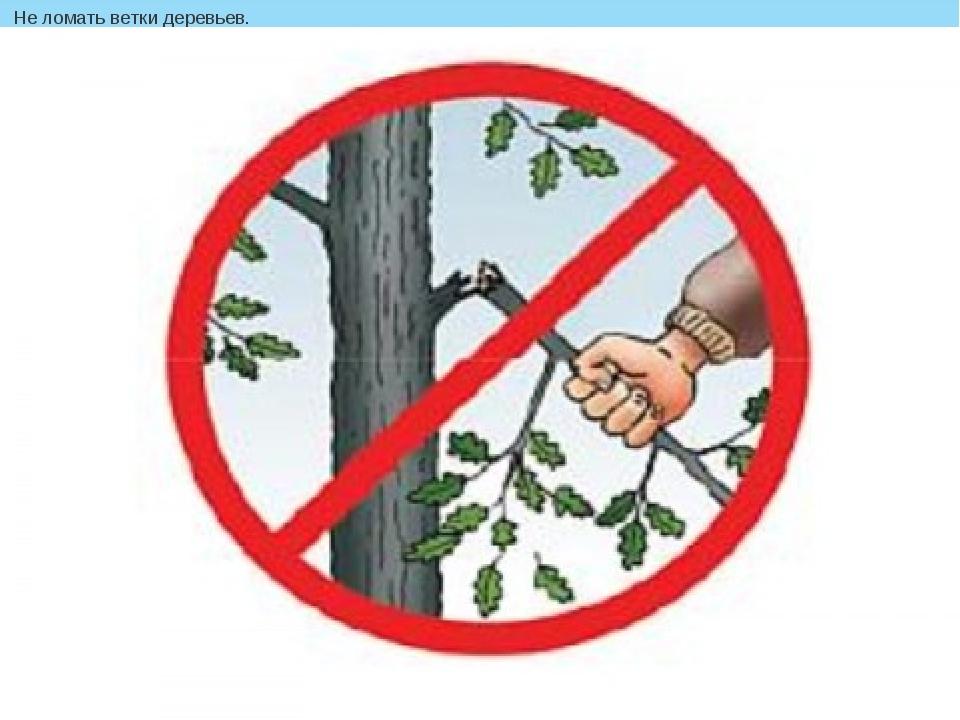 Не ломать ветки деревьев.