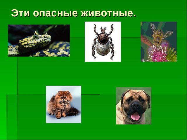 Эти опасные животные.