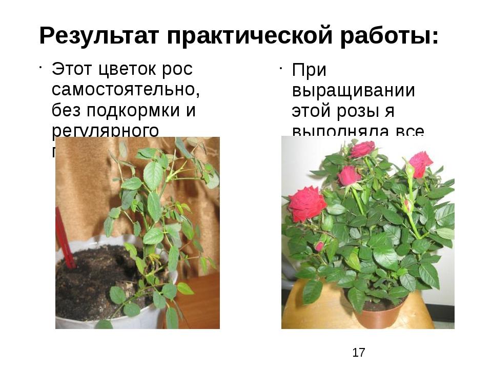 Результат практической работы: Этот цветок рос самостоятельно, без подкормки...