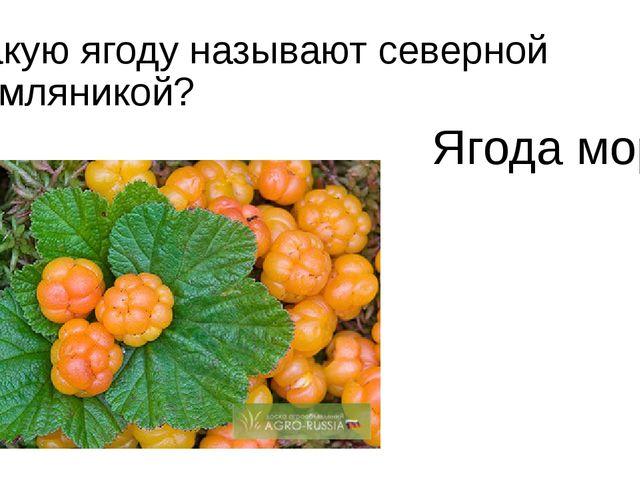 Какую ягоду называют северной земляникой? Ягода морошка