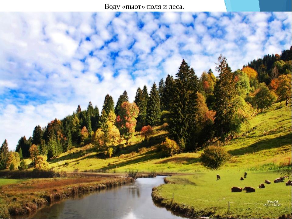 Воду «пьют» поля и леса.