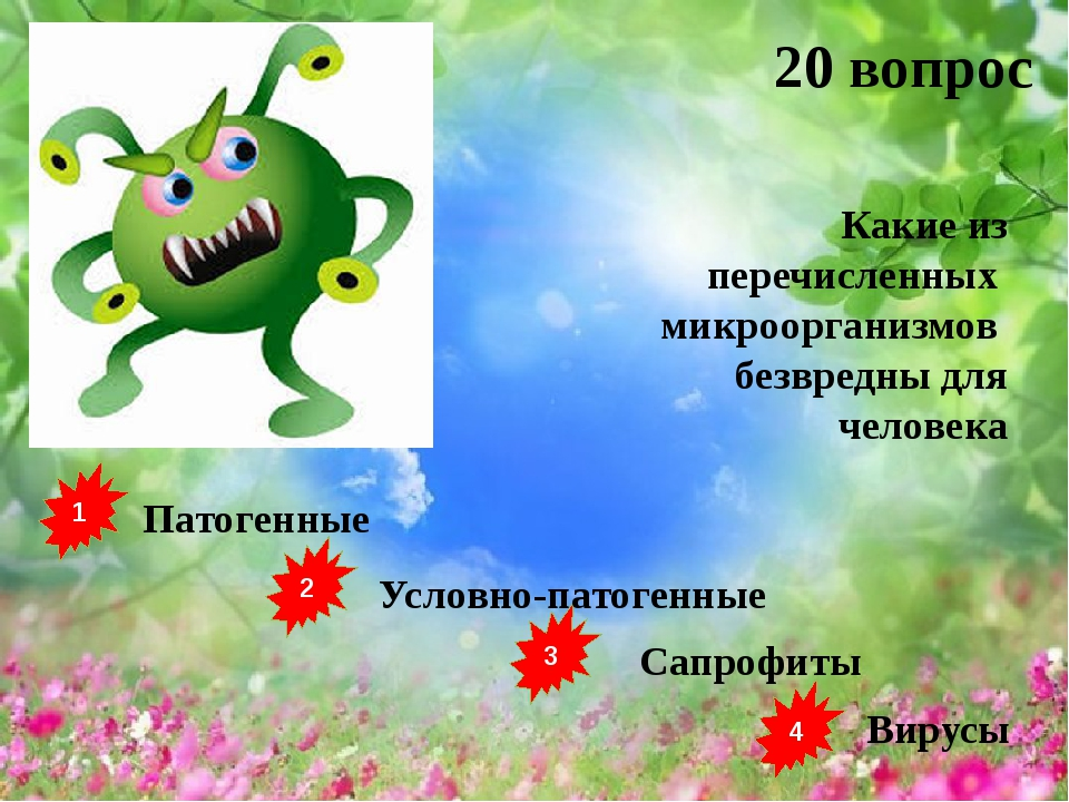 1 2 3 4 Патогенные Условно-патогенные Сапрофиты Вирусы 20 вопрос Какие из пер...