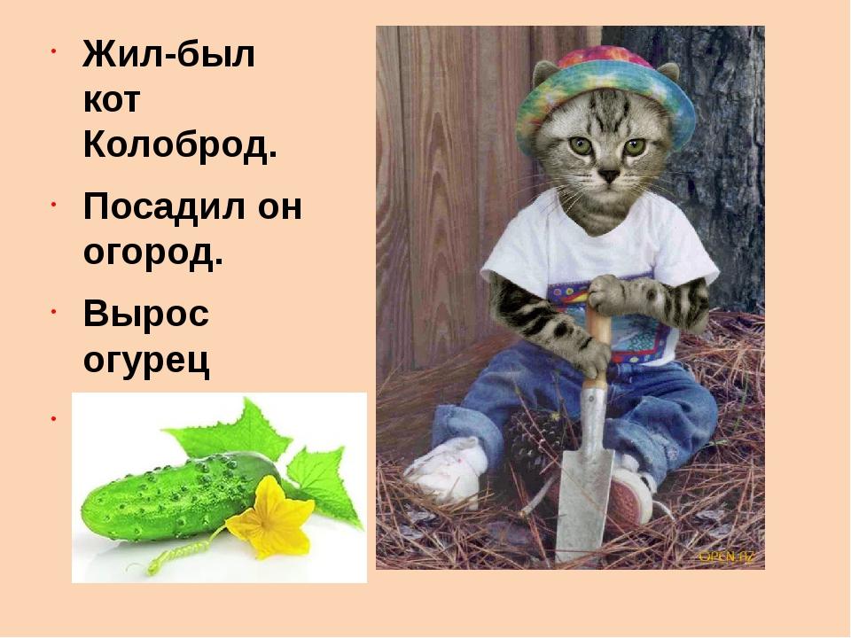 Жил-был кот Колоброд. Посадил он огород. Вырос огурец Вот и сказочке конец!