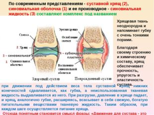 По современным представлениям - суставной хрящ (2), синовиальная оболочка (1)