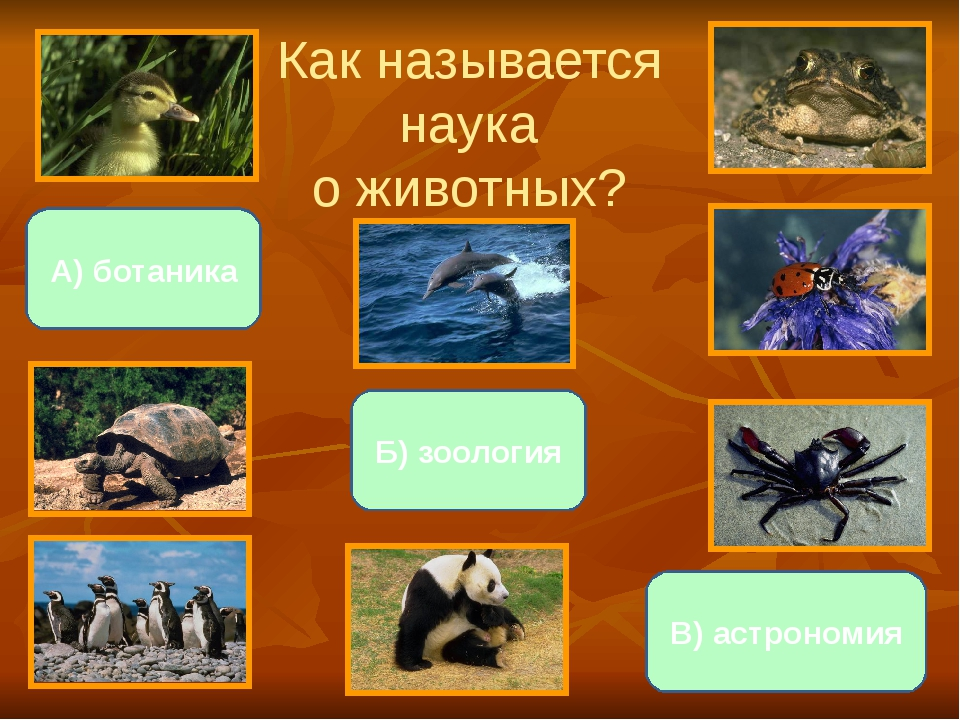 Как называется наука о животных? Б) зоология А) ботаника В) астрономия