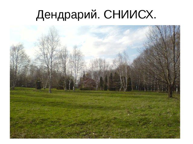 Дендрарий. СНИИСХ.