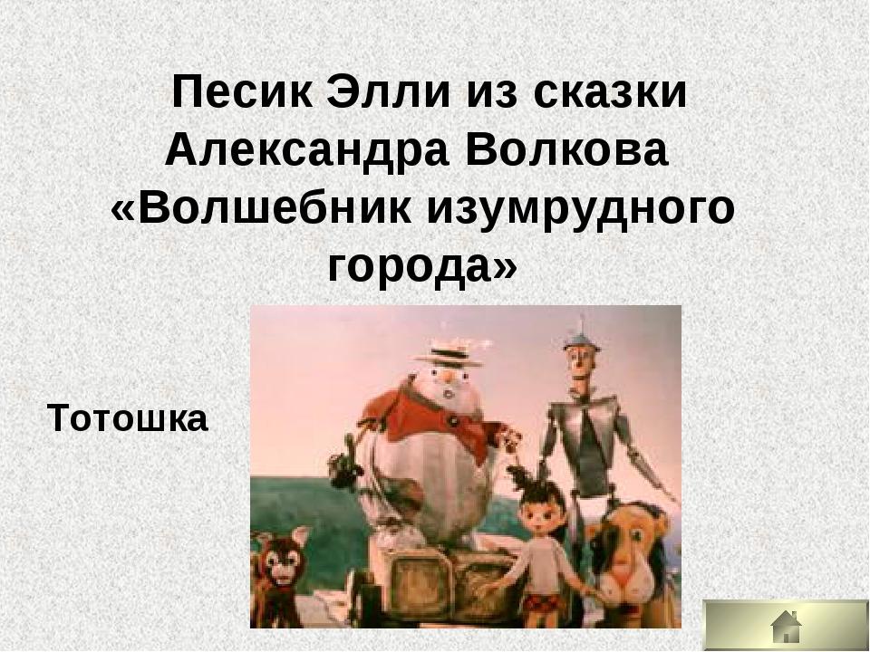 Песик Элли из сказки Александра Волкова «Волшебник изумрудного города» Тотошка