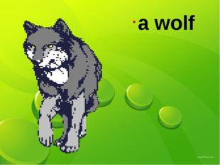 а wolf