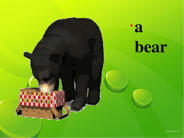 а bear