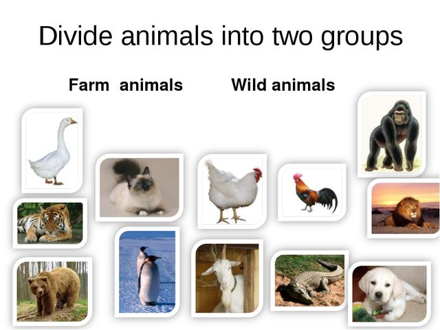 Divide animals into two groups Farm animals Wild animals