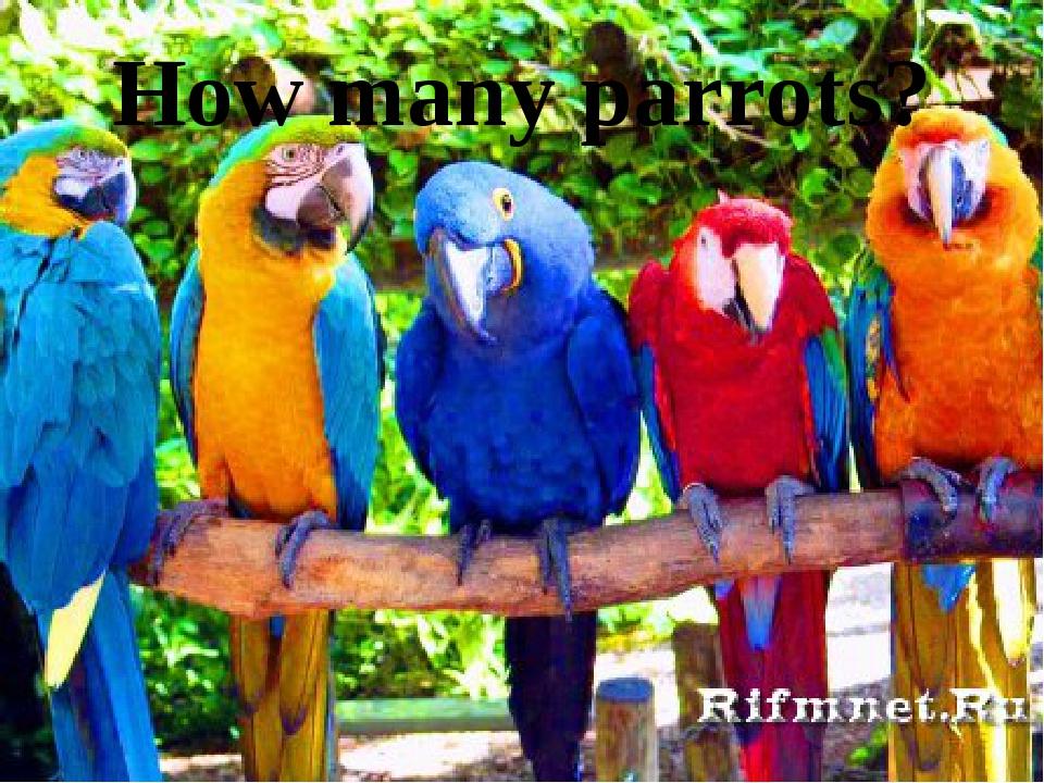 How many parrots?