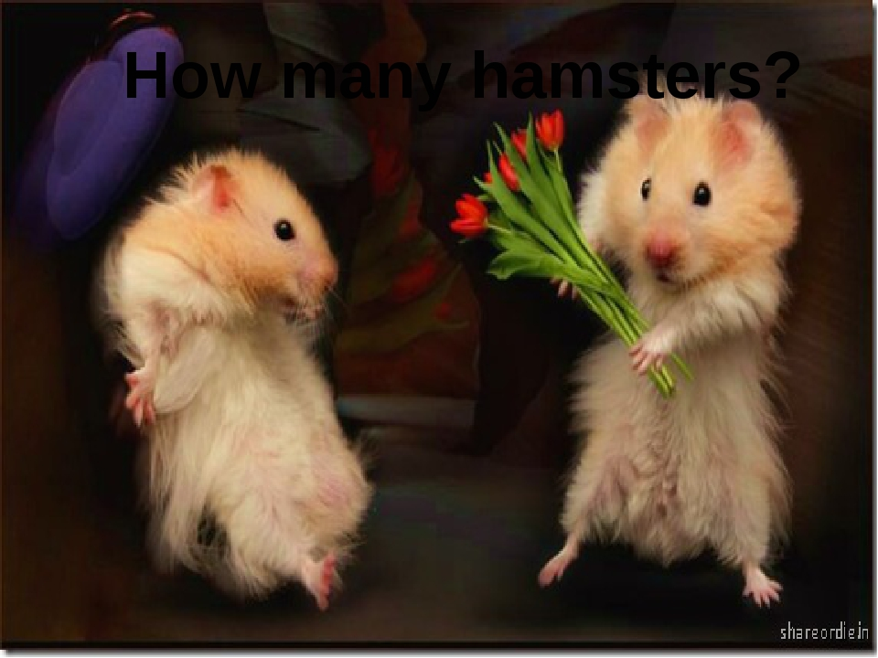 How many hamsters?