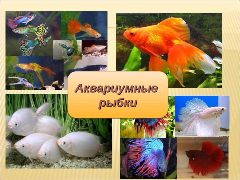 Сценарий о рыбках