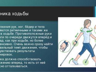 Техника ходьбы Движения рук, ног, бёдер и тела являются ритмичными и такими ж
