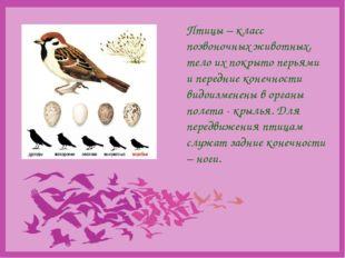 Птицы – класс позвоночных животных, тело их покрыто перьями и передние конеч
