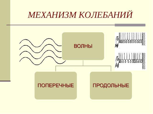 МЕХАНИЗМ КОЛЕБАНИЙ