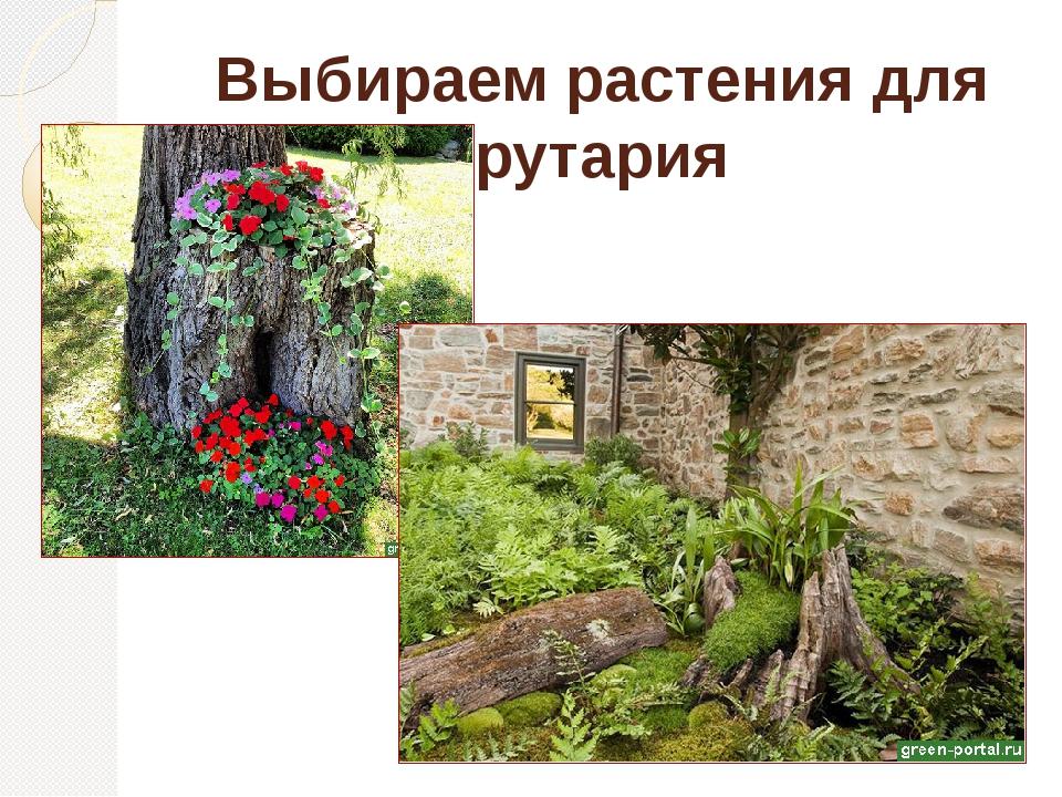 Выбираем растения для рутария