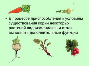 В процессе приспособления к условиям существования корни некоторых растений в