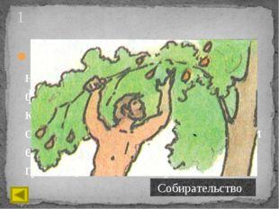 Первый посева пример и образчик прививки деревьев Был непосредственно дан при
