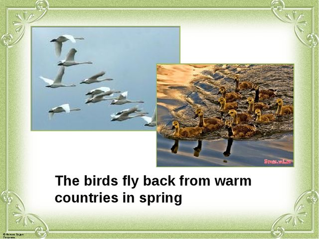 The birds fly back from warm countries in spring © Фокина Лидия Петровна