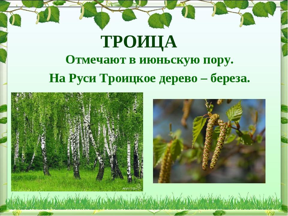 ТРОИЦА Отмечают в июньскую пору. На Руси Троицкое дерево – береза.