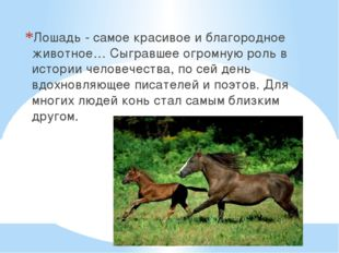 Лошадь - самое красивое и благородное животное… Сыгравшее огромную роль в ист