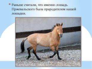 Раньше считали, что именно лошадь Пржевальского была прародителем нашей лошад