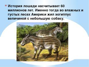 История лошади насчитывает 60 миллионов лет. Именно тогда во влажных и густых