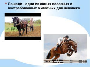 Лошади - одни из самых полезных и востребованных животных для человека.