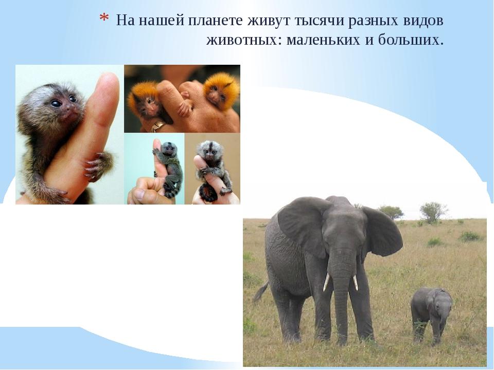 На нашей планете живут тысячи разных видов животных: маленьких и больших.