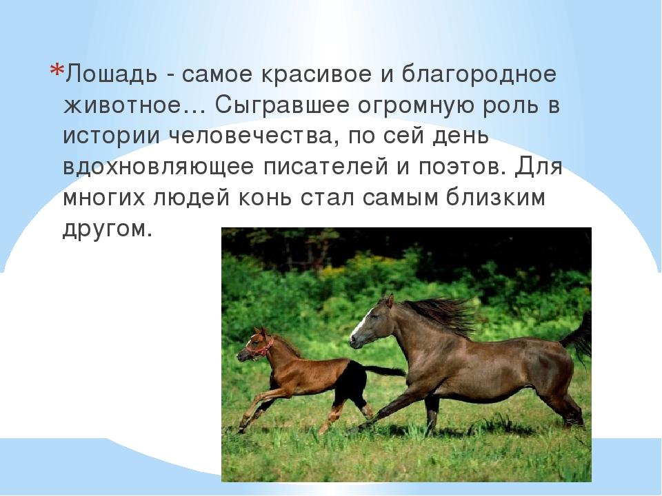 Лошадь - самое красивое и благородное животное… Сыгравшее огромную роль в ист...