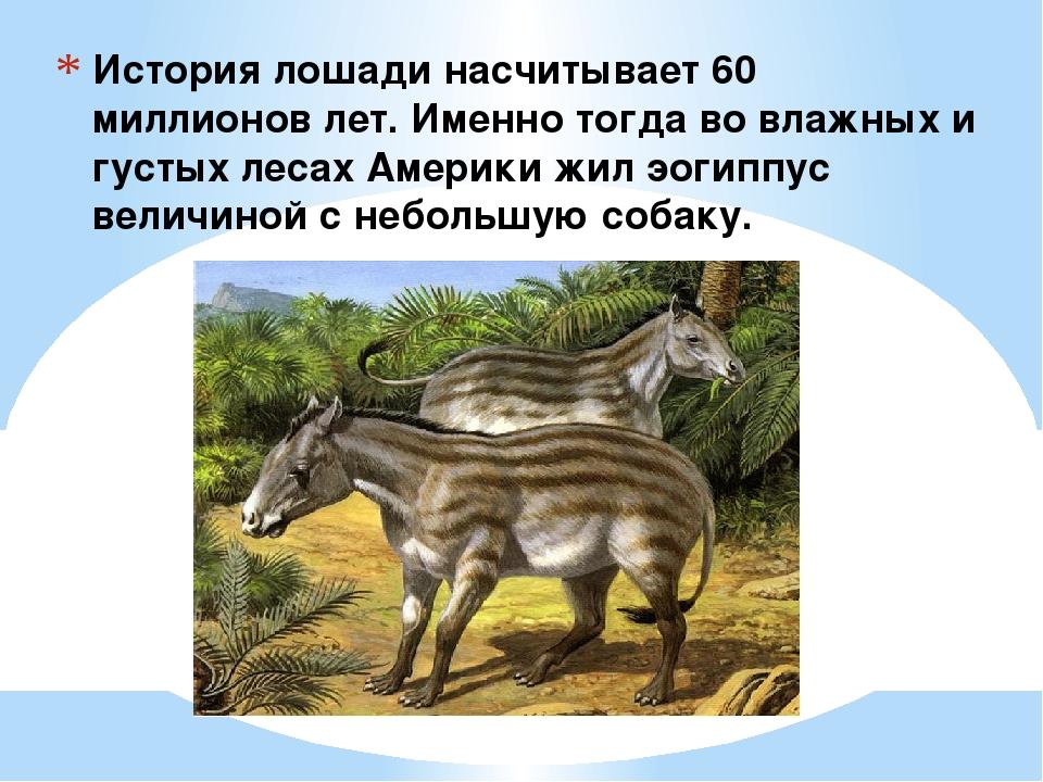 История лошади насчитывает 60 миллионов лет. Именно тогда во влажных и густых...
