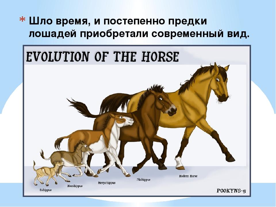 Шло время, и постепенно предки лошадей приобретали современный вид.